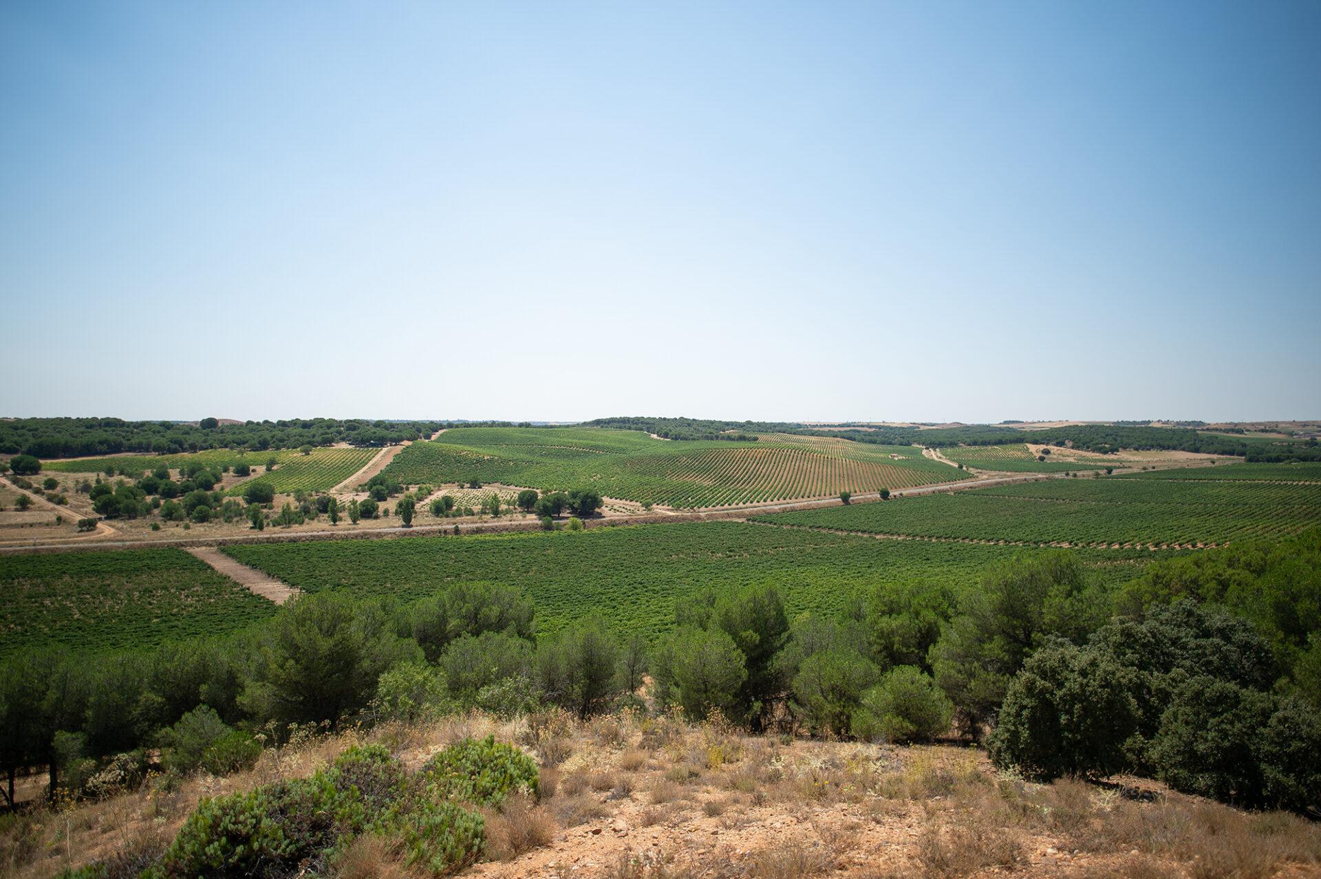 Bodega Arbocala. Toro (Zamora). Cowine
