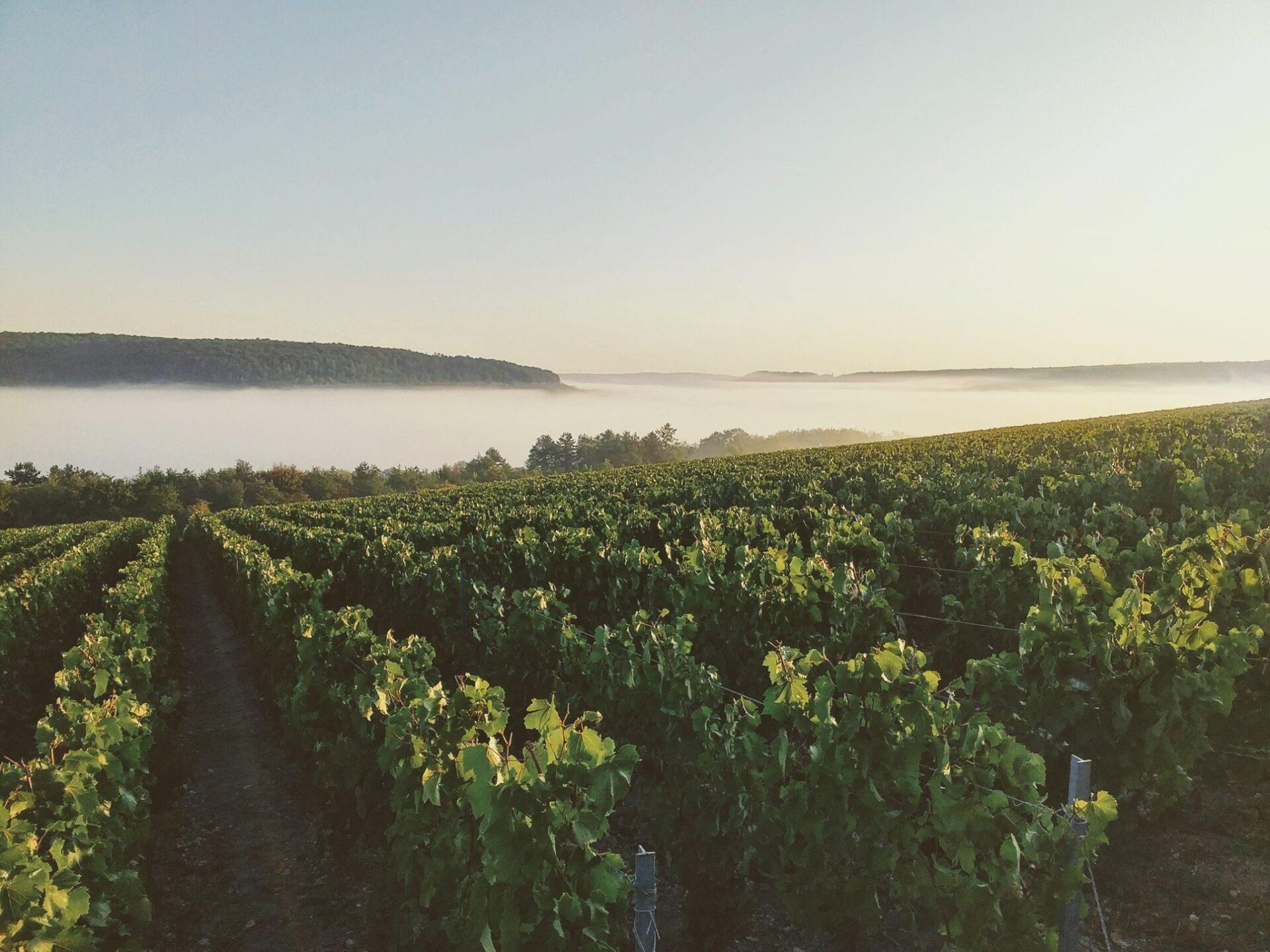 lacroix-triaulaire Champagne. Francia. Cowine